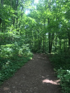Moorman's trail is a well-marked path.