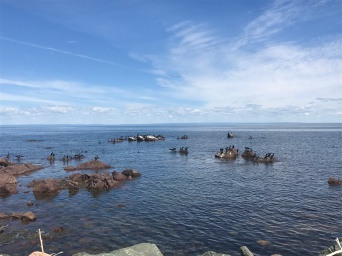 Various waterfowl on the Bay of Chaleur.
