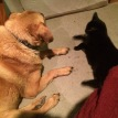 Rusty, and his play-buddy, LJ, one of our cats.