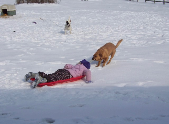 Rusty attempts to pull Maddie in a sled. It was a funny moment! Our first dog, Oreo, is in the background.