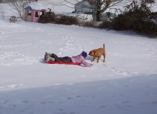 Rusty attempts to pull Maddie in a sled. It was a funny moment!