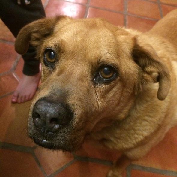 Rusty was a good boy, with an ol' soul.