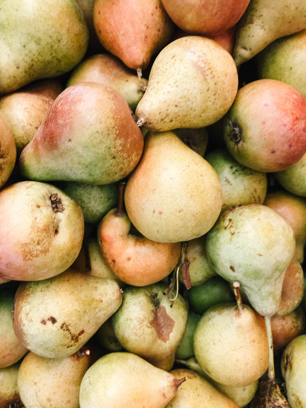 close up photo of bunch of pears