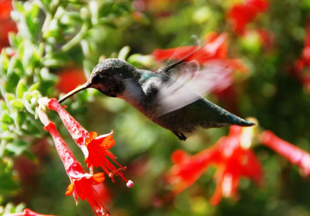 black hummingbird selective focus photography