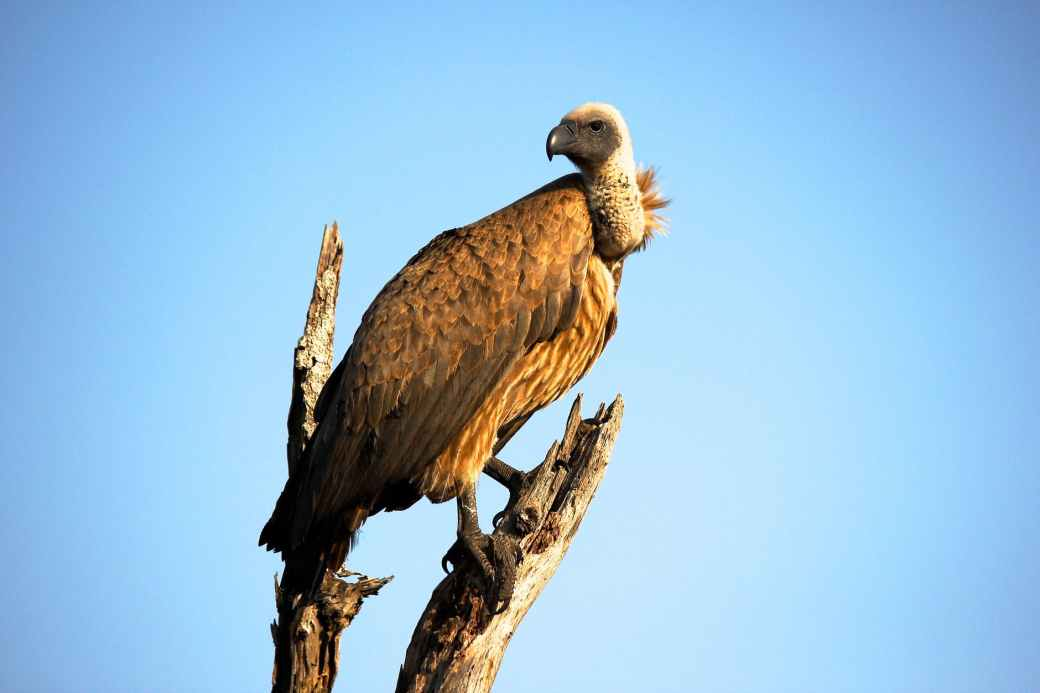 close up photography of brown vulture